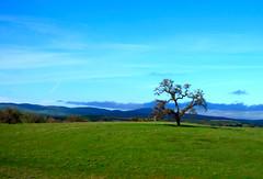 California rolling hills (kananj) Tags: california green hills rollinghills kananj kananjani