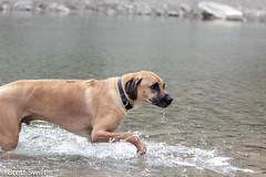 Sloppy (brettswift) Tags: dog calgary enzo