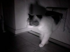 20160502-021754-i-1 (Catflap central) Tags: camera pet cats cat pi raspberry meow catdoor catflap kattenluik katzenklappe catflapj2nnl