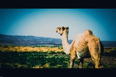 _95A0568 (yacinoo78) Tags: canon algerie hogar tassili borj djanet tassilinajjer ihrir elhawas 5dm3