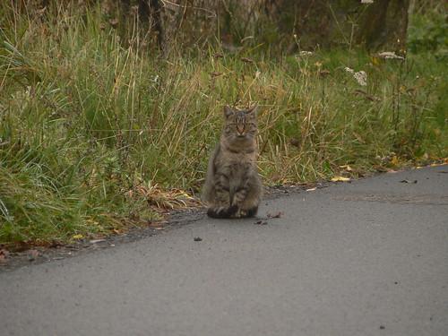 Obergeorgenthaler Katze I