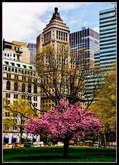 Hurryup (Geo_grafics) Tags: new york city nyc trees newyork tree grass challengegamewinner