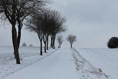 Schwaney (* Kalli *) Tags: schnee sonnig bewlkt windig starkbewlkt