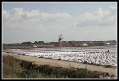 IMG_1768 (rinosaltini1) Tags: saline sicilia trapani marsala dello mozia riserva stagnone