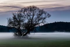 Bodennebel breitet sich aus [Explored] (fotomanni.de) Tags: nebel baum abendhimmel bibertgrund