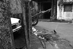 Sharing space (Rajib Singha) Tags: street travel bw india bird interestingness transport nostalgia kolkata westbengal nikond200 flickriver