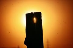Luz y mosquitos (Japo Garca) Tags: sunset luz sol valencia atardecer rojo tramonto naranja mosquitos fotografa albufera hueco garca japo