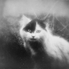 Little & Wild (Funda _) Tags: animal cat kitten flickr katze wildcat tah kedi tier hayvan wildkitten hanx