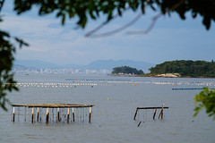 Florianopolis-6616 (Joao Marcelo Correa) Tags: brazil florianópolis