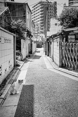 untitled (t-miki) Tags: cat