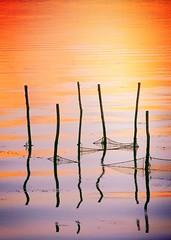 Tramonto nel Delta (alex.gb) Tags: reflections tramonto delta lagoon po laguna venezia albarella caleri tronchigabbianitramonto