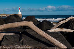 Amble Harbour 22 (View From The Chair Photography) Tags: seascape landscape rocks branches driftwood