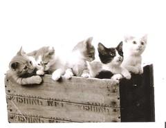001 (Iridale) Tags: cats animals kitten postcrossing postcards gatti animali cuccioli cartoline