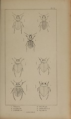 n118_w1150 (BioDivLibrary) Tags: greatbritain insect bugs beetles arthropoda californiaacademyofsciences coleoptera taxonomy:order=coleoptera colorourcollections bhl:page=39306914 dc:identifier=httpbiodiversitylibraryorgpage39306914 bhlarthropod