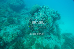 NE_Abrolhos0008 (Visit Brasil) Tags: horizontal brasil fauna natureza bahia nordeste detalhe externa abrolhos semgente subaqutica diurna