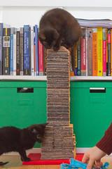 IMG_2999 (BalthasarLeopold) Tags: pet cats pets animal animals cat blackcat mammal kitten feline dof kittens felines blackcats indoorcat dephtoffield scratchpost