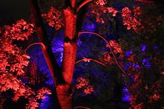 IMG_3128 (Katie Abruzzi) Tags: pink net lights republic purple czech prague multimedia signalfestival