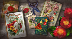 Garden Shed Table (John Jardin) Tags: wood flowers red stilllife plants sunlight texture vintage garden table colorful shadows gardening victorian tools retro seeds blooms camellia rugged packets