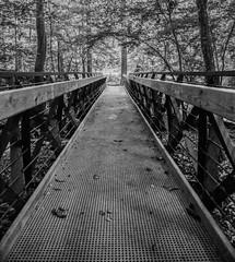 Botanical Garden Bridge (toddmwise) Tags: bridge trees bw white black tree art sc lines canon garden photography grey woods forrest south southcarolina southern botanicalgardens depth leading clemson canon6d