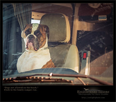 Dogs aren't allowed on the beach. (enlightphoto) Tags: auto dog pet pets dogs window face look car animal animals eyes alone sitting sad looking expression boxer lonely van sadface lookingsad