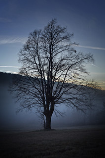 Tree on a half light / half dark background
