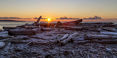 Frosty Logs (Paul Rioux) Tags: morning beach sunrise dawn frost britishcolumbia logs frosty vancouverisland driftwood daybreak colwood westshore esquimaltlagoon prioux