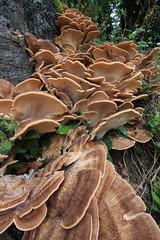 Fungi in Trebah Garden, Cornwall