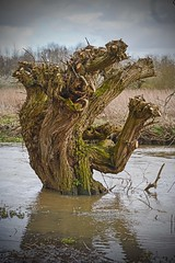 River Monster. (Cycling Saint) Tags: river leicester aylestonemeadows nikond600nikkor50mmf18d