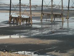 Seaweed Festoons (Munki Munki) Tags: sea seaweed beach reflections pier shadows lowtide saltburn seacoal wintersunsine