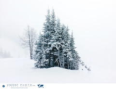 Trees during a snowfall at the Lake Louise Ski Resort (Vincent Demers - vincentphoto.com) Tags: voyage ca trip travel trees winter mountain snow canada mountains cold tourism nature sport montagne landscape rockies skiing hill arbres skiresort alberta banff neige lakelouise snowfall paysage wintersport froid rocheuses tourisme banffnationalpark snowymountains skiarea winterlandscape mountainrange skislope canadianrockies winterscene travelphotography travelphoto evergreentree mountainpeak winteractivity conifre touristdestination traveldestination laclouise touristresort pentedeski paysagedhiver photographiedevoyage attractiontouristique paysagehivernal photodevoyage lakelouiseskiresort montagneenneige centredeski rocheusescanadiennes parcnationalbanff destinationtouristique improvementdistrictno9 travellocation destinationdevoyage centredeskilaclouise paysageenneige