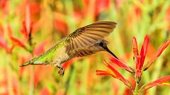 "Peek A Boo (vgphotoz) Tags: arizona macro nature closeup peekaboo ngc npc bif ""exoticimage"" vgphotoz"