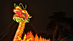 _C0A8665REWS Fire in the Trees,  Jon Perry, 3-3-16 zas (Jon Perry - Enlightenshade) Tags: color colour night dragon chinesenewyear lanterns coloredlights chiswick chinesedragon chineselanterns chiswickhouse colouredlights 3316 jonperry chiswickhouseandgrounds chiswickhousegrounds enlightenshade arranginglightcom magicallanternfestival 20160303
