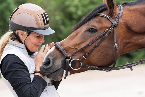 Horses Insight  (20)