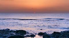Sunrise (khalid almasoud) Tags: morning sea sky birds sunrise sony  photographyrocks dscrx100m2 sonya5100