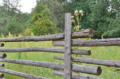 Finnish Fence Line at Old World Wisconsin (Tamarack 42) Tags: fence nikon finnish primitive fenceline farmlife oldworldwisconsin 15challengeswinner nikon35mmf18 nikond7000