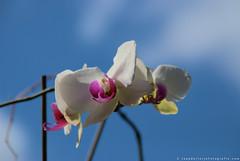 Een fraaie lentedag (Omroep Zeeland) Tags: zeeland lente zeeuws typisch