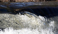 P1190806 (Rimager) Tags: water river waterfall dam fallingwater