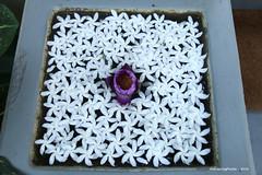 Floating Flower Decoration - Purple lotus flower in a sea of white flowers - Sri Lanka (WanderingPJB) Tags: flowers srilanka floating decoration purplelotusflower whiteflowers img smileonsaturday oddoneout