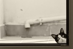 Curiosidad (Egg2704) Tags: bw cats byn blanco animal cat y negro gatos gato animales mascota mascotas egg2704
