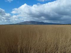 Criffel from Caerlaverock NNR (celastrina) Tags: scotland april marsh habitat criffel dumfriesgalloway caerlaverock