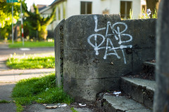 04-09-2016 (whlteXbread) Tags: seattle washington summilux 50mmf14 m9 2016 labrat faceit365:date=20160409