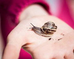 My sticky friend ! (Kevin STRAGLIATI) Tags: pink friends light sun childhood animal kid spring hands backyard play buddies outdoor snail sunny hikey 500d 50mmstm