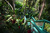 Going Places (grinnin1110) Tags: usa flora outdoor northamerica caribbean zingiberaceae stthomas territory usvirginislands usvi naturetrail gingerlily redgingerlily alpinapurpurata stpetergreathouse cruise2016 botanicalgardenatthegreathouse
