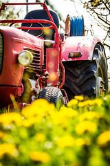 IMG_8718.jpg (vossemer) Tags: de deutschland jahreszeiten natur pflanzen blumen verkehr traktoren frhling blten trecker niedersachsen lwenzahn jork frhjahr