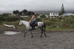 IMG_EOS 7D201604036730 (David F-I) Tags: horse equestrian horseback horseriding trailriding trailride ctr tehapua watrc wellingtonareatrailridingclub competitivetrailriding sporthorse equestriansport competitivetrailride april2016 tehapua2016 tehapuaapril2016 watrctehapuaapril2016