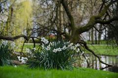 Rotterdam 10-04-2016 SM-19 (Pure Natural Ingredients) Tags: park flowers holland garden spring nikon d70 nederland thenetherlands sigma f18 f28 bloemen euromast zuid 105mm niceweather voorjaar schoonoord d90 50mmoutdoor botanicbotanishetuin