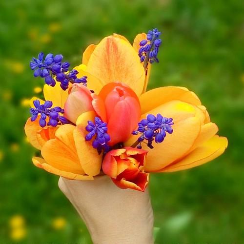 Spring weekend greeting from our garden 🌷🌷🌷💜 #tulips #tuliptime #ilovetulips #springflowers #springmood #springtime #spring #flowers