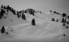 (raimundl79) Tags: winter white landscape nikon foto ngc landschaft wald weiss fotographie myexplorer nikond800 flickrexploreme