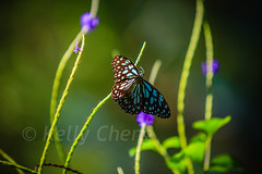 Taiwan-121113-199 (Kelly Cheng) Tags: travel color colour green tourism nature animals horizontal fauna butterfly daylight colorful asia day taiwan vivid nobody nopeople colourful traveldestinations  northeastasia
