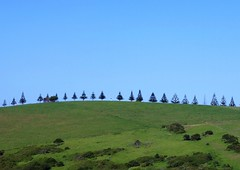 Pines on the skyline, Gerringong, NSW, Australia (roslyn.russell) Tags: cemetery coast nsw anchor pinetrees headland gerringong
